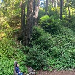 Deetjen's forest